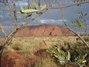 Uluru! Klassisch!